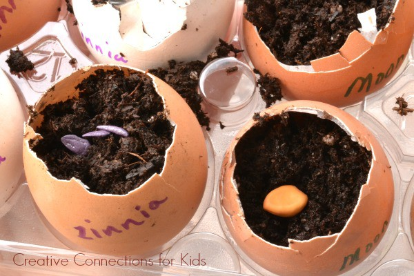 Planting seeds in eggshells!