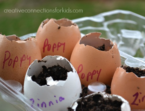 Planting seeds in eggshells- flowers
