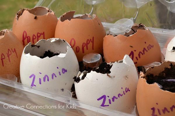 Planting seeds in eggshells in Spring